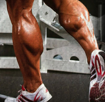 how_to_grow_bigger_calves