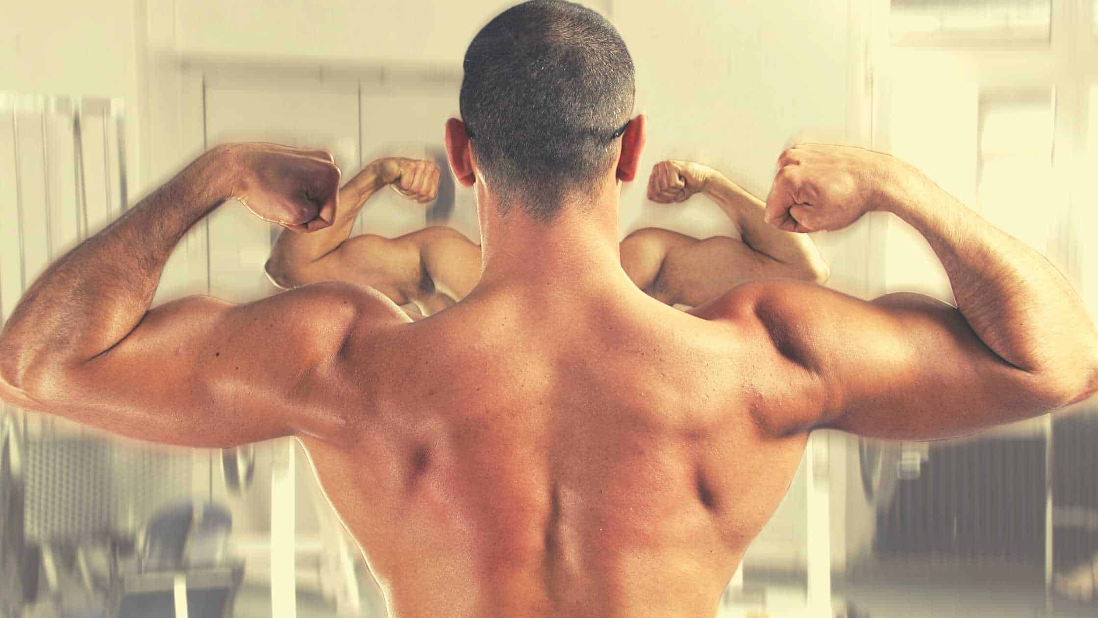 protein muscle